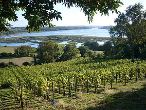 La vigne à Saint-Suliac